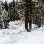 Rally Sweden 2019 ©MSport (10)